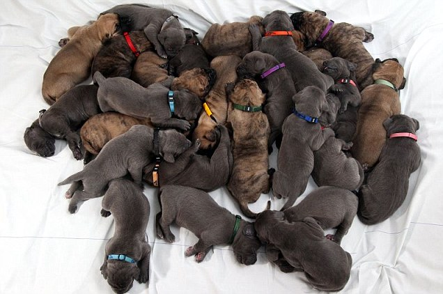 Mitos e Verdades sobre castração nos Pets