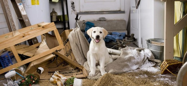 Enriquecimento ambiental para os pets