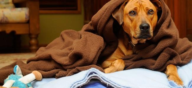 Cão com frio