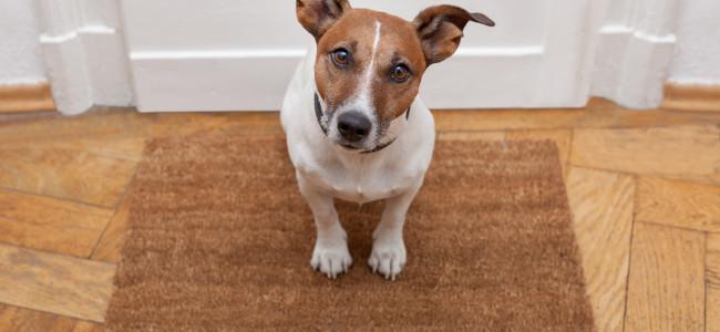 Como entreter seu cão em casa