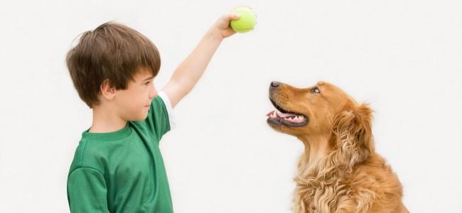 6 dicas para treinar seu cão