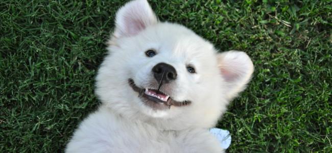 20 hábitos saudáveis para cuidar do seu cão