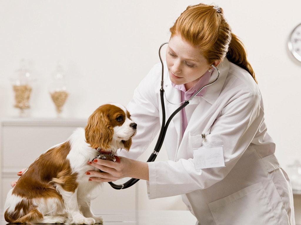 Ministério da Agricultura abre inscrições para contratação de veterinários