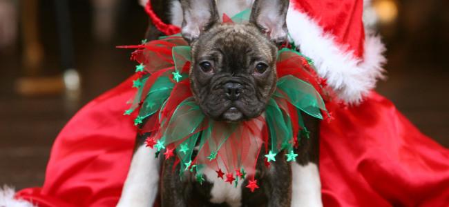 Festas de fim de ano e os pets!
