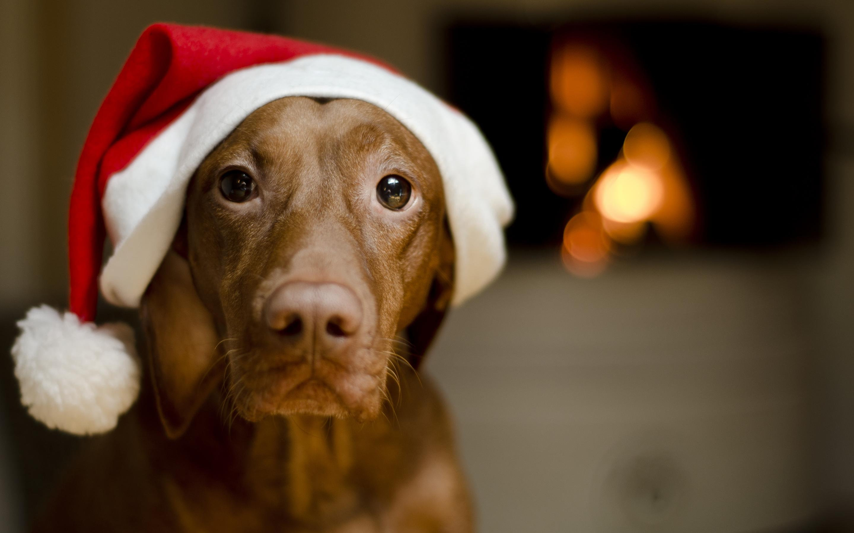 Feliz Natal Pet Shop Online Lolipet Blog