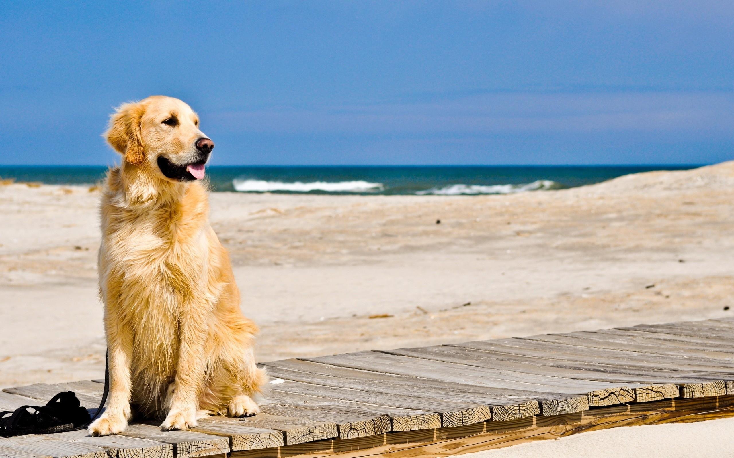 Dicas para refrescar o verão dos Pets