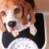Saiba se seu cão está com o peso ideal