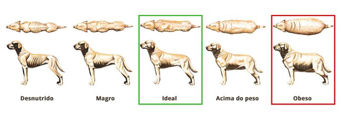 Gráfico Cães - Peso Ideal