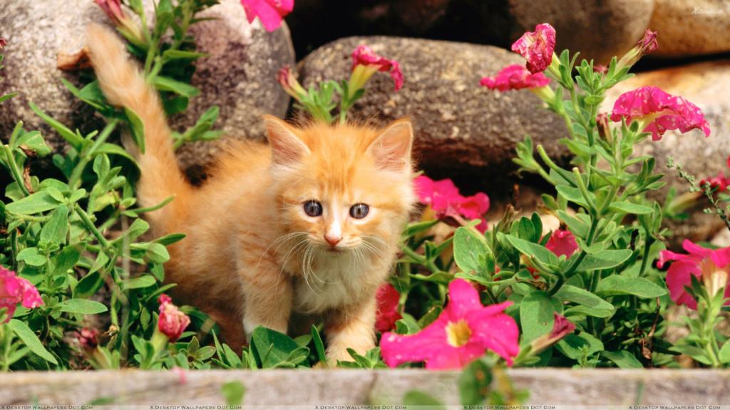 Veja quais são as plantas tóxicas para Gatos