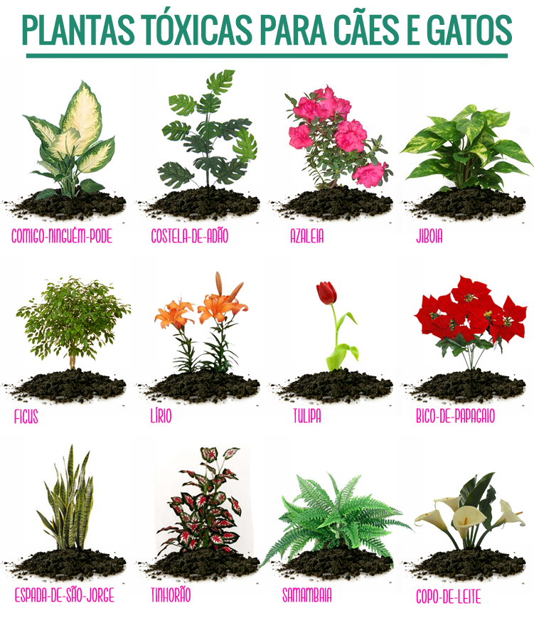 Plantas t xicas para c es e gatos pet shop online for Plantas toxicas gatos
