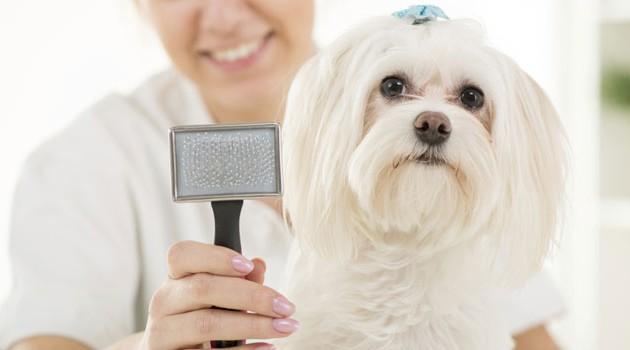 Escovação dos Pets - escolha a escova ideal