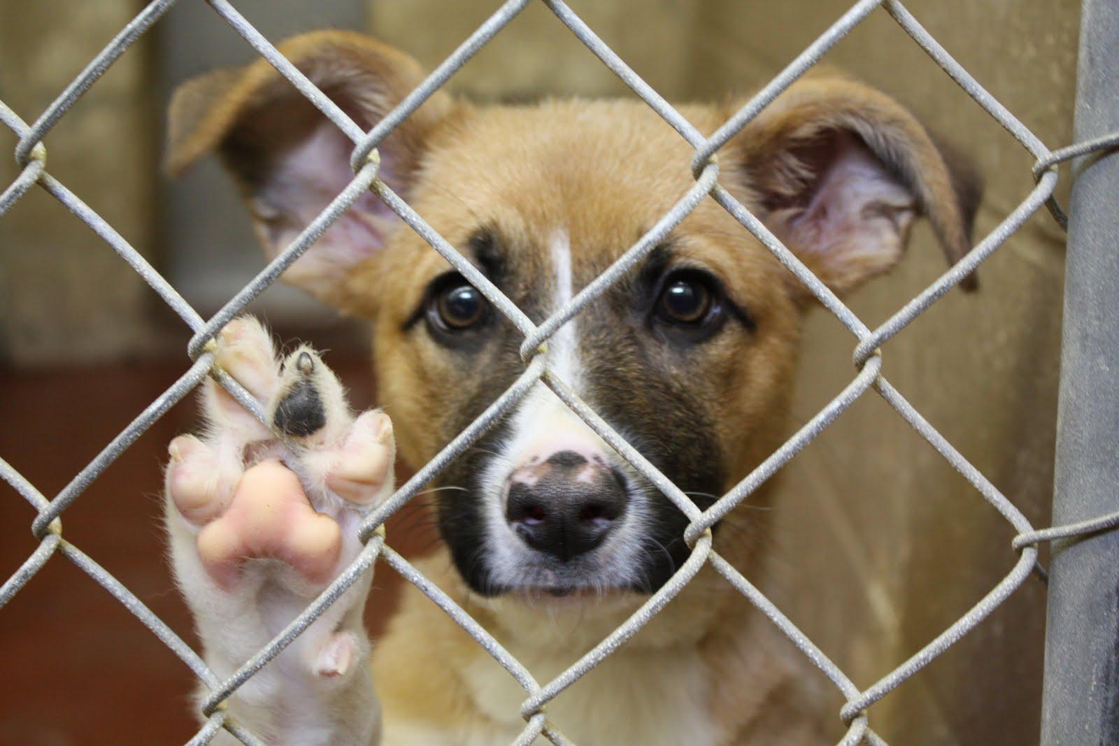 Adoção Pet: Dicas e Cuidados