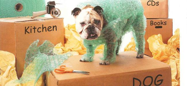 Cães - Mudança de casa