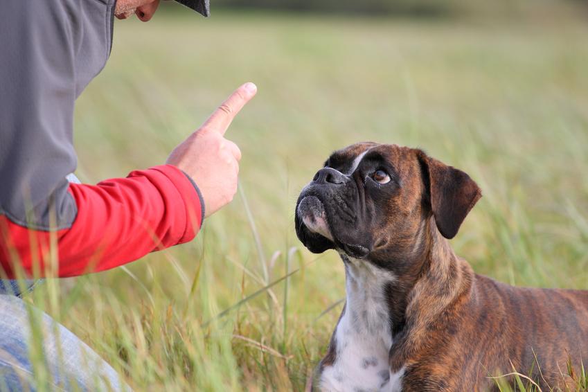 Coprofagia em Cães