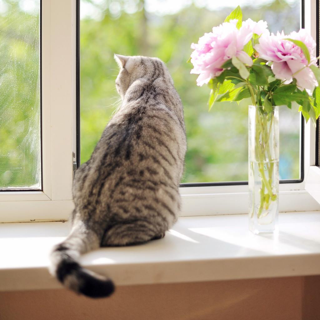 Gatos adoram altura, então a atenção à janelas e varandas deve ser redobrada!