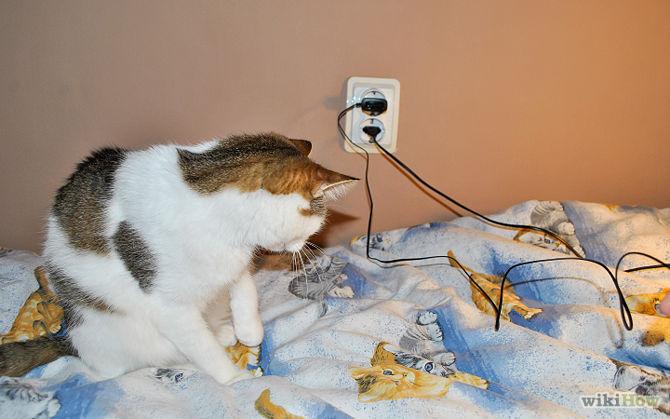 Qualquer fio solto pode atrair a atenção dos pets!