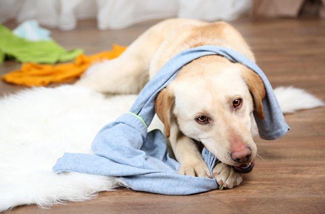 Pets são curiosos e vivem caçando novas aventuras, confira 13 dicas de como evitar acidentes!
