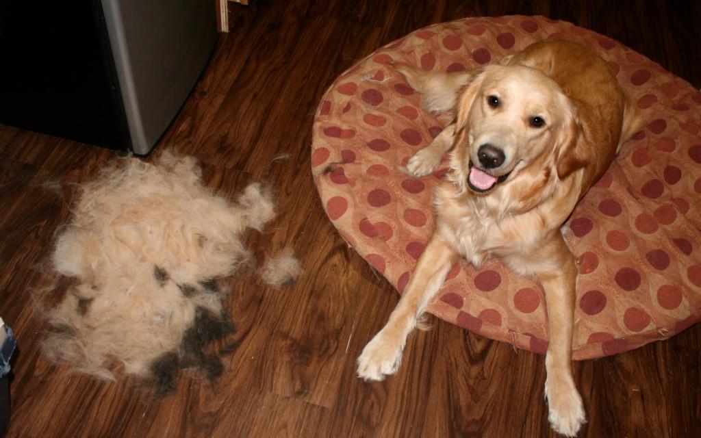 A escovação diária ajuda muito!