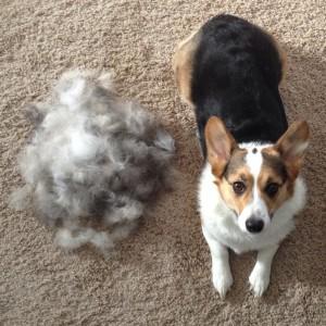 A escovação diária evita os pelos espalhados pela casa!