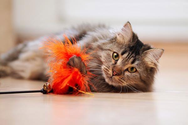 Gatinhos também precisam brincar! Assim como os cães, os gatos precisam de estimulos e diversão!
