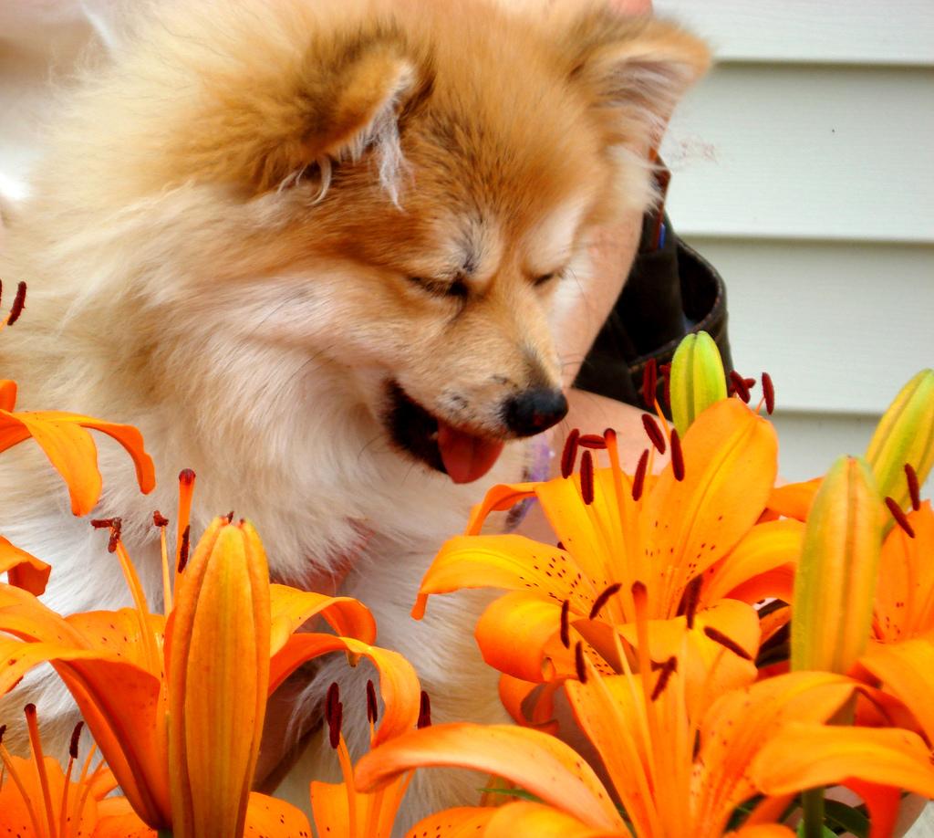 Alergia em Cães e Gatos Pet Shop Online Lolipet Blog #CA3401 1024 918