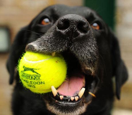 Programe um tempo para brincar com seu pet!