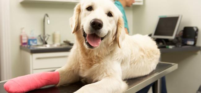 8 dicas para acalmar seu Cão antes do Veterinário!