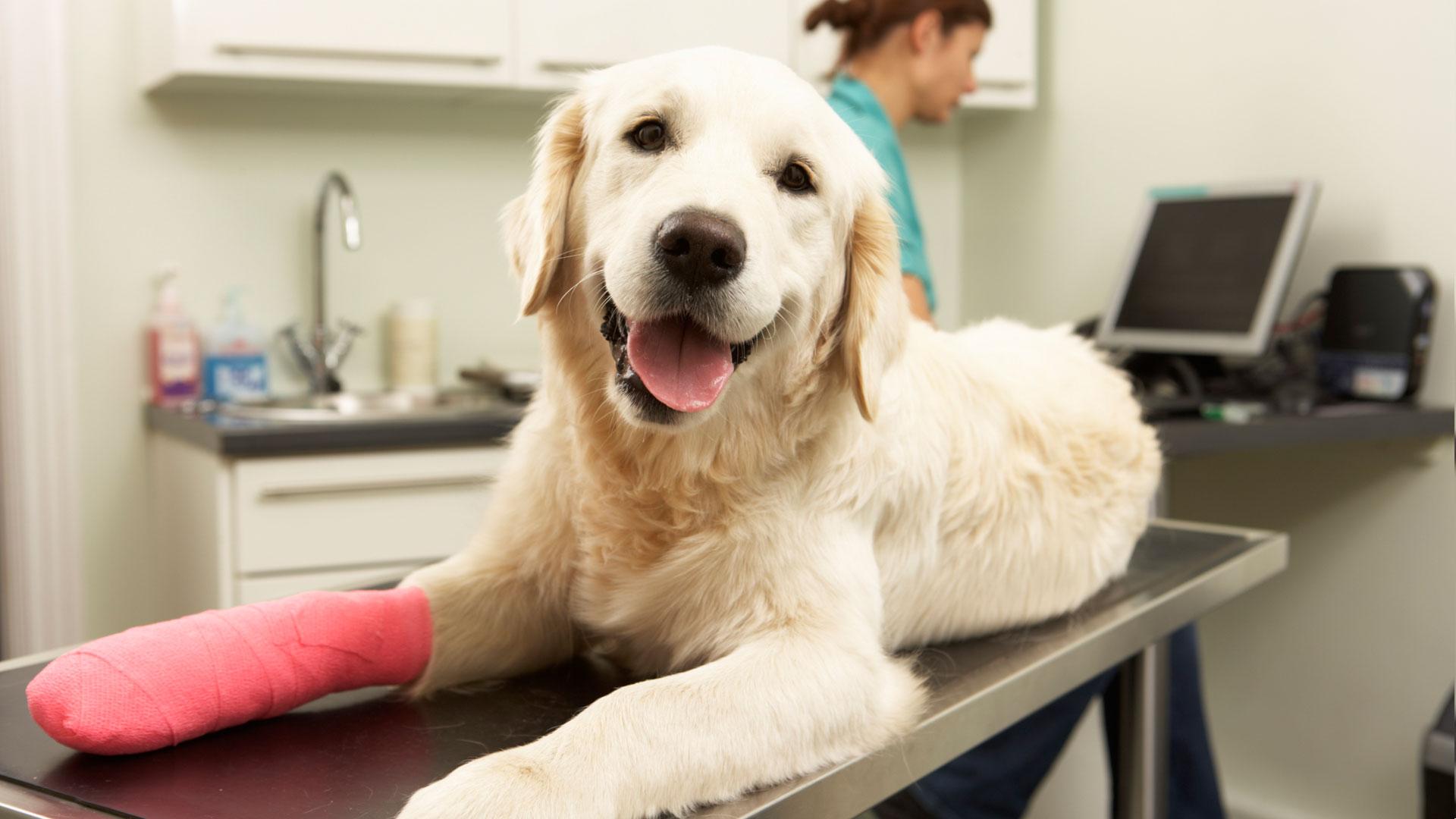 8 Dicas para acalmar seu Cão no Veterinário