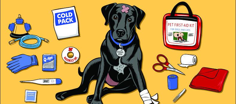 Monte seu kit de primeiros socorros Pet!