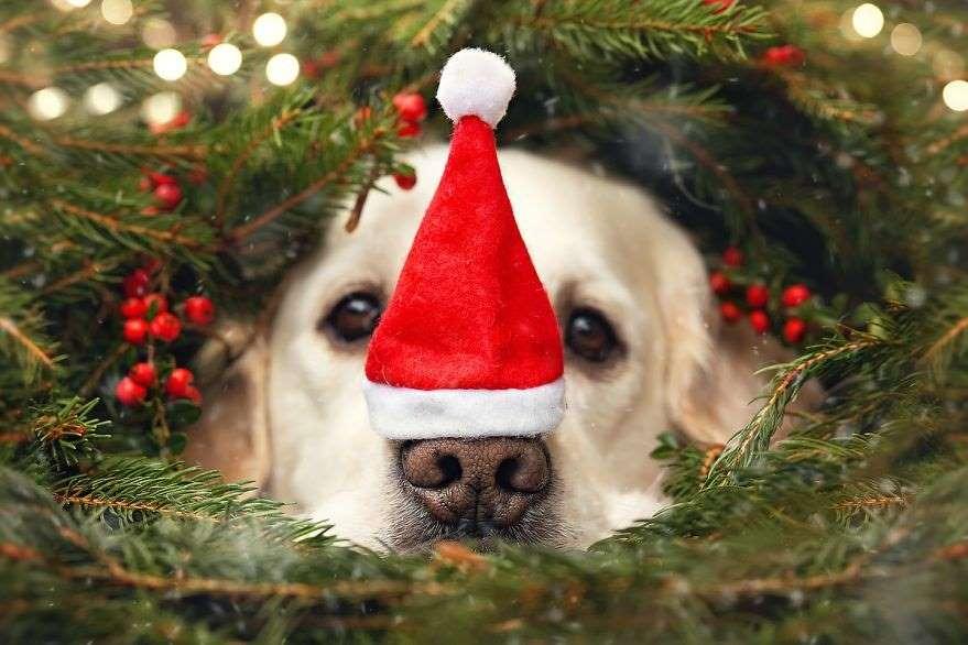 Natal para Cães