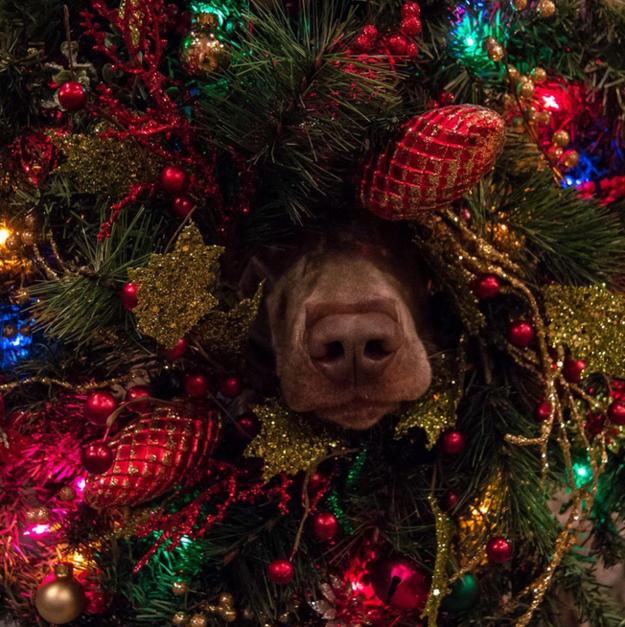 Cuidados com a árvore e decoração de Natal!