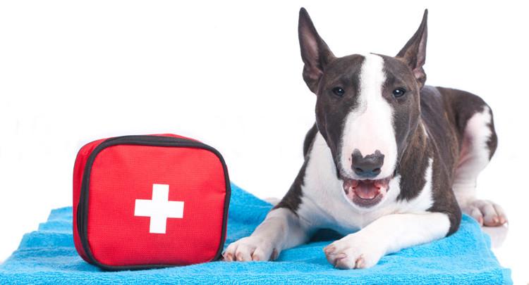 Saiba a importancia de ter um Kit de Primeiros socorros para seu Pet!