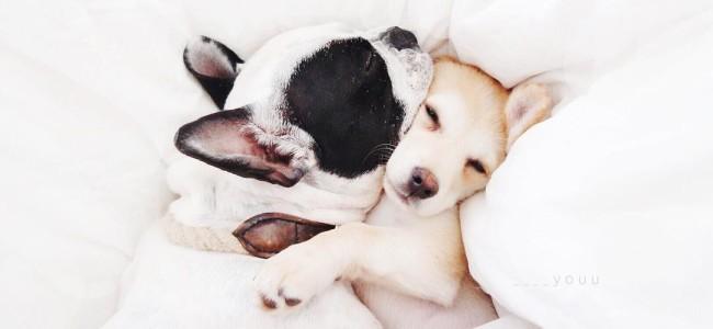 Cachorros sonham?!