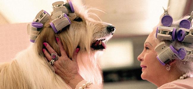 Você e seu pet tem personalidades semelhantes?