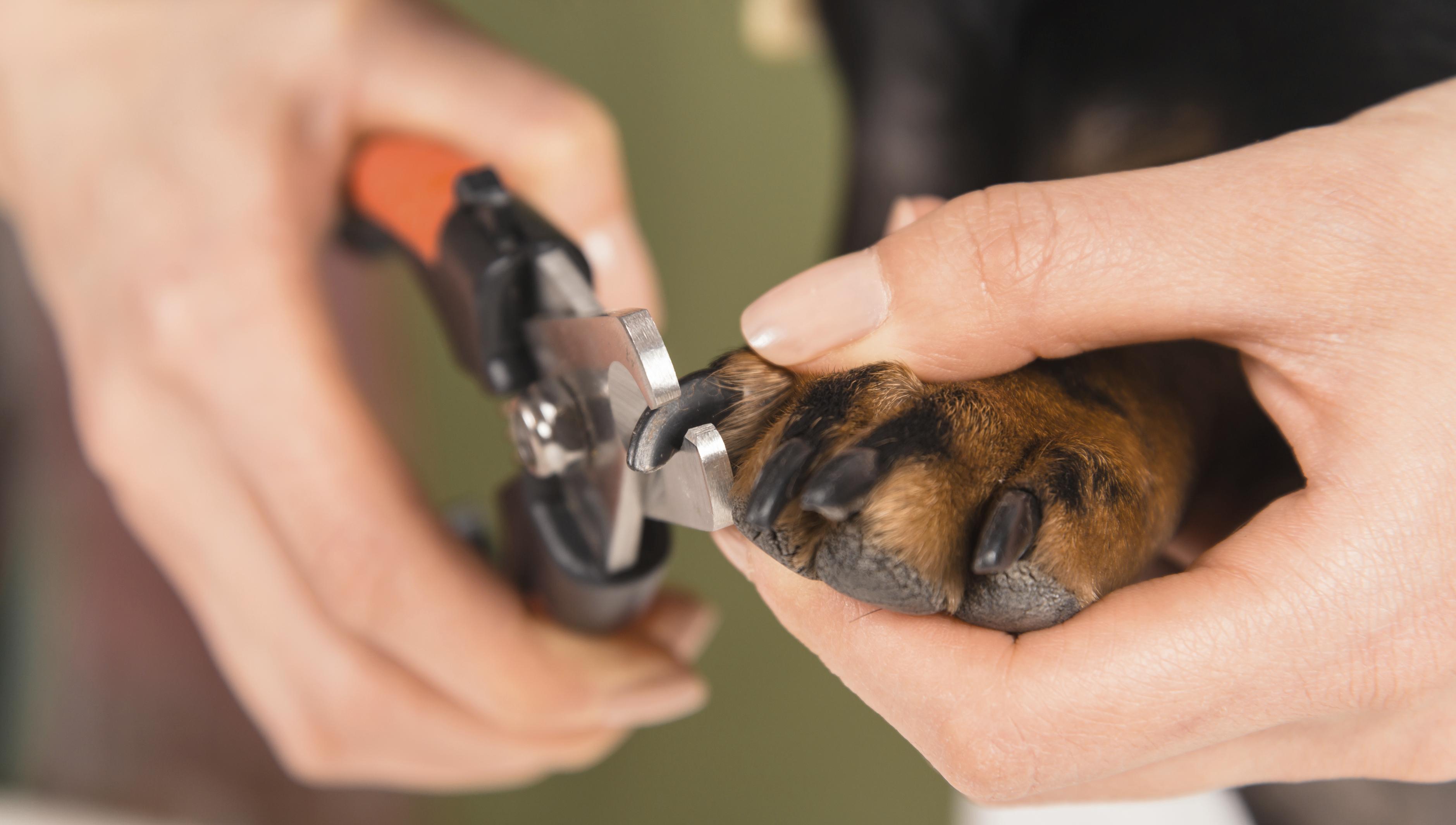 Porque cortar as unhas do pet?