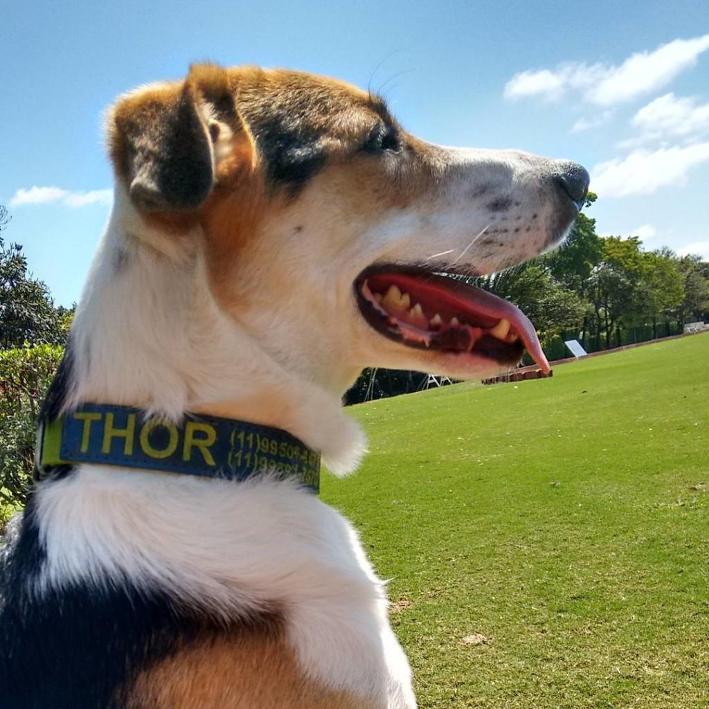 Não basta escolher o nome, você deve identificar o seu cachorro de alguma forma para mantê-lo seguro dentro e fora de casa. Conheça nossas coleiras personalizadas.
