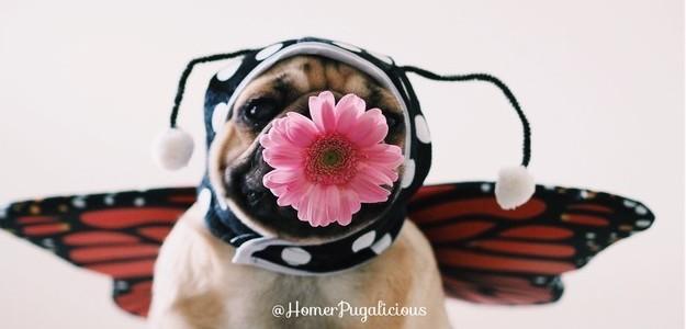 Seu peludo adora uma folia?!