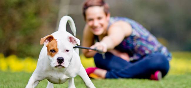 22 benefícios que cães trazem para a saúde humana!