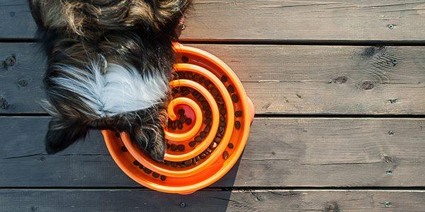 Seu Cão come rápido demais?