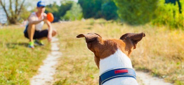 7 Brincadeiras ao ar livre para você e seu cão!