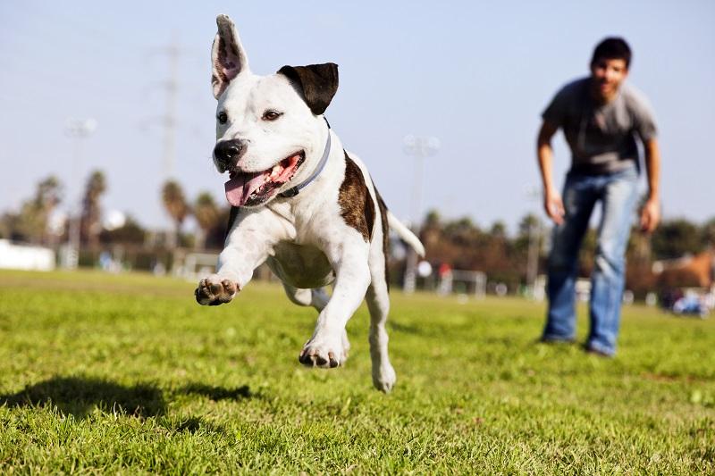 7 dicas de brincadeiras ao ar livre para você e seu cão!