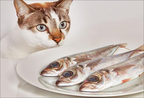 Os Gatinhos amam Peixe!