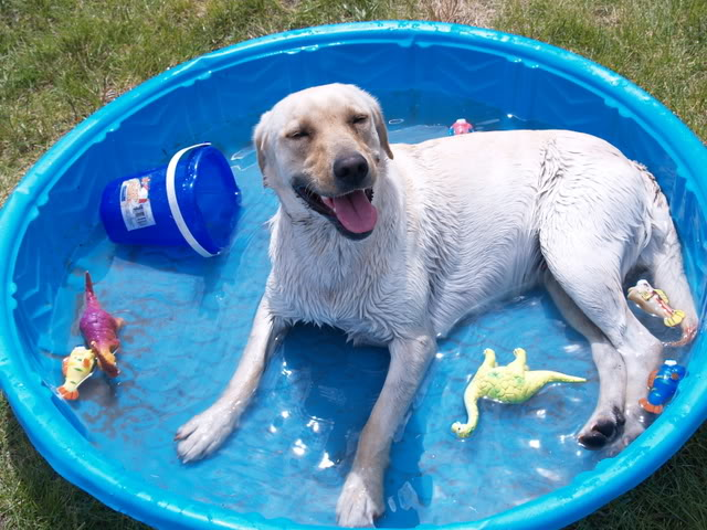 Como evitar a Desidratação dos Pets!