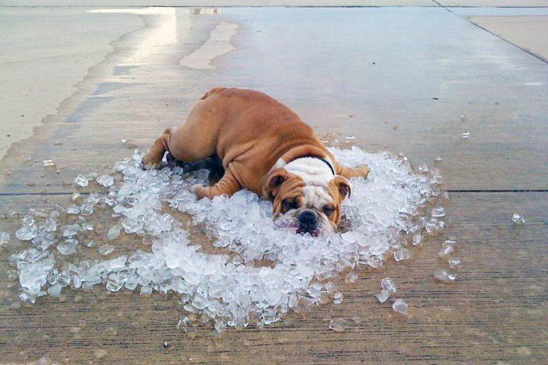 dog-on-ice-1-e1466194233528