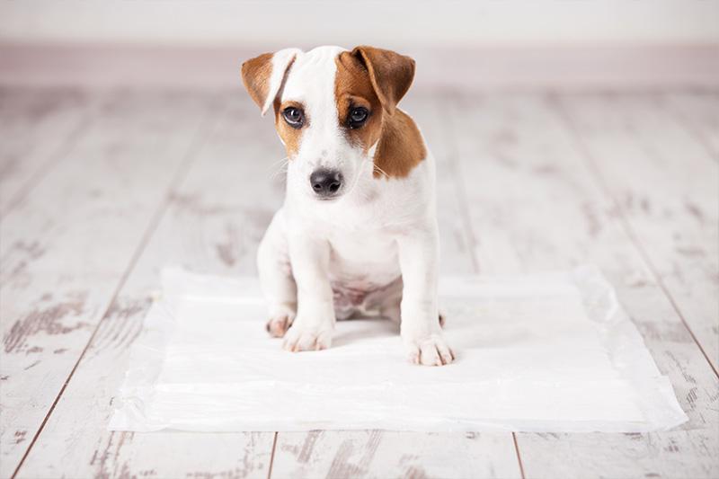 Cães gostam de rotina e demarcar o ambiente é ideal para facilitar o treinamento!