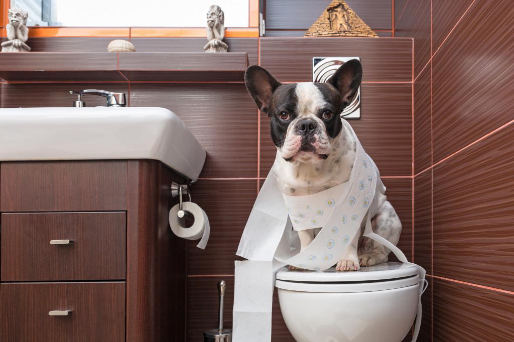 Guia: Como ensinar o Cão a fazer xixi e cocô no lugar certo