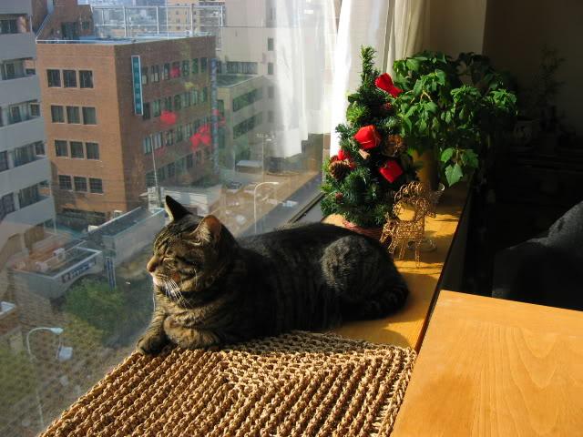 Os gatinhos costumam se adaptar bem, desde que as necessidades deles sejam atendidas.