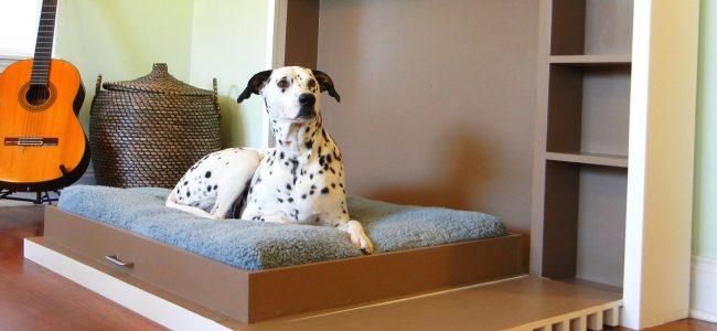 A importancia de ter uma Cama para o Cachorro