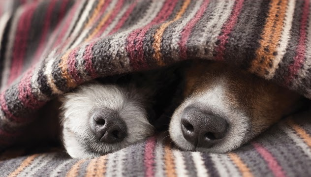 O frio também deixa os peludos mais suscetiveis à doenças, por isso alguns cuidados são fundamentais.