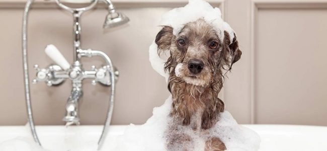 Banho e Tosa devem ser mantidos no inverno, com algumas diferenças e cuidados extras.